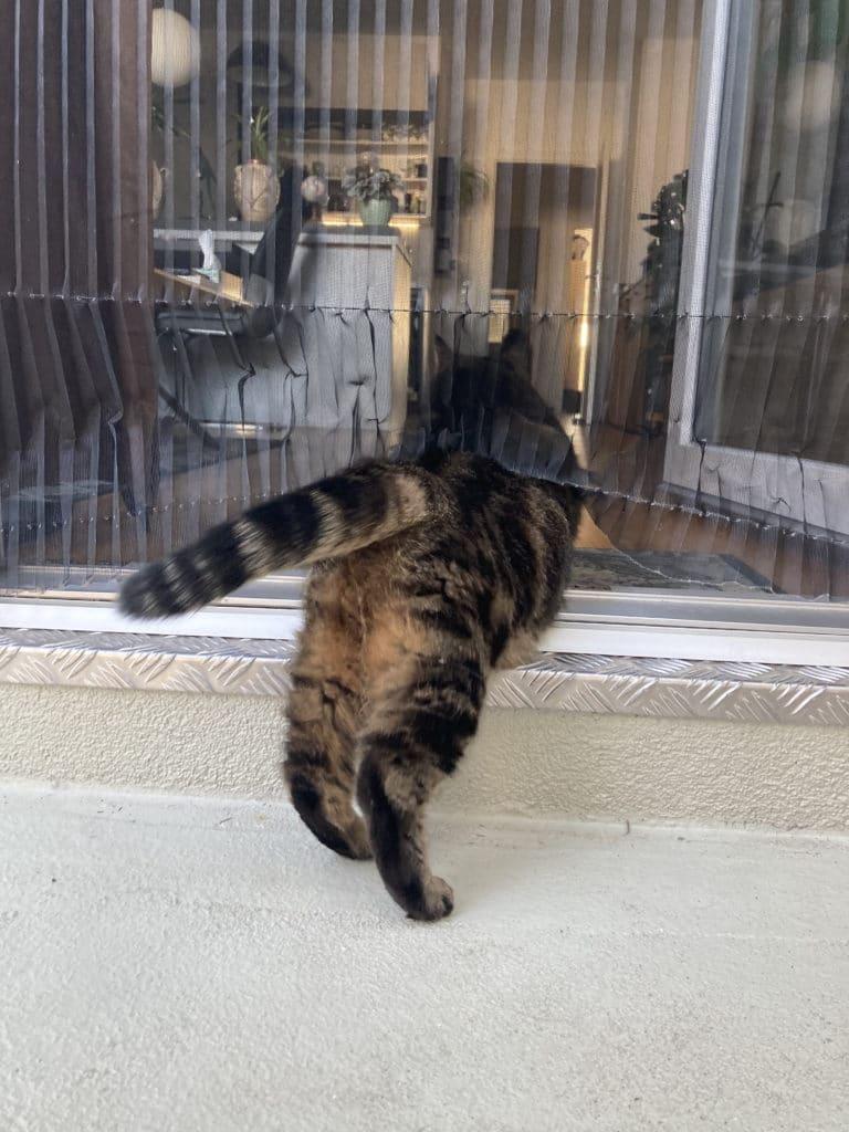 Katze versus Insektenschutzgitter