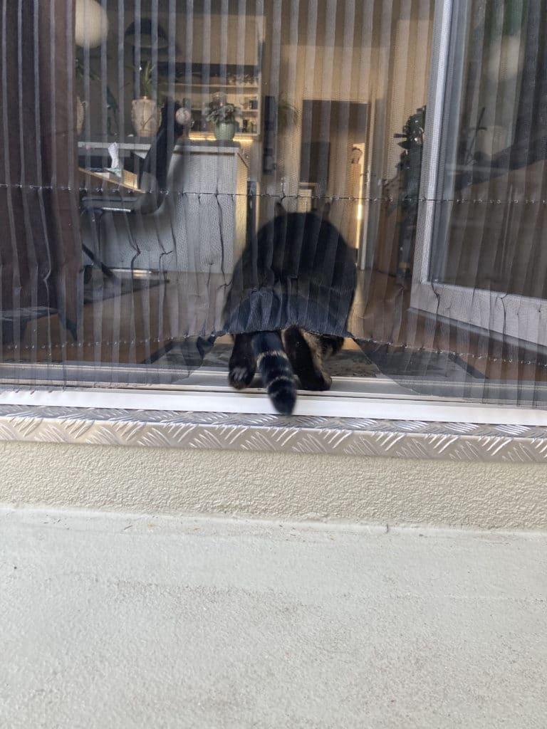 Die Katze ist drin!